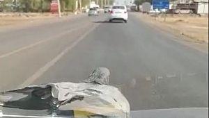 Otomobil sileceklerinde seyahat eden güvercin