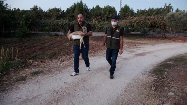 Kaçak yolla Mersin'e getirildiği düşünülen ceylan koruma altına alındı ( Video Haber )
