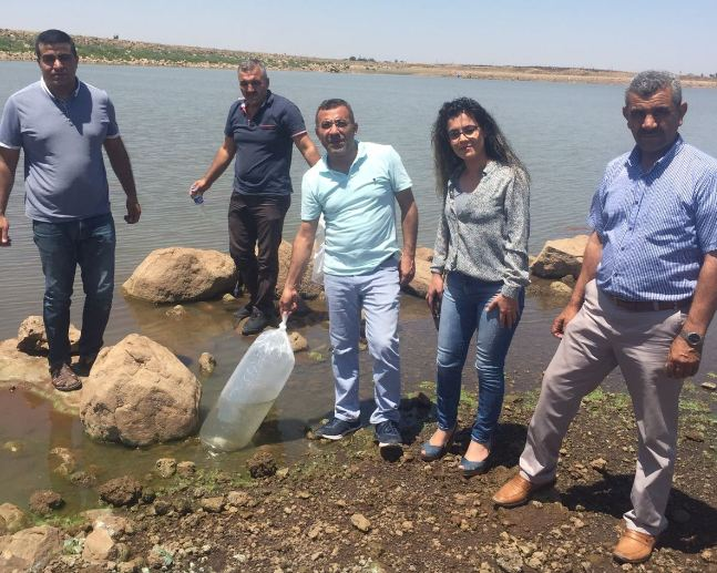 Sulutepe Göletine 300 bin balık bıraktı