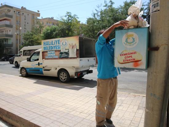 Haliliye'de bayat ekmekler, doğal yaşama kazandırılıyor