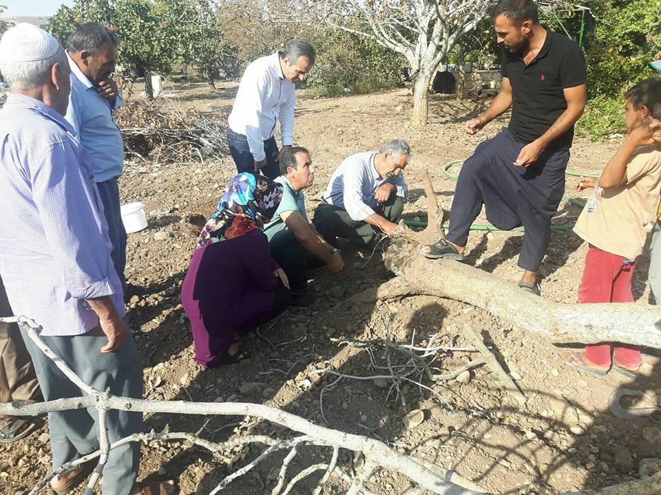 Tarım danışmanları üç mahallede fıstık ytiştiricilşiği eğitimi verdi