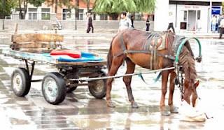 At arabasında düşen kadın hayatını kaybetti