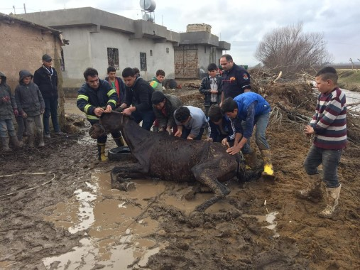 Bataklığa saplanan at kurtarıldı
