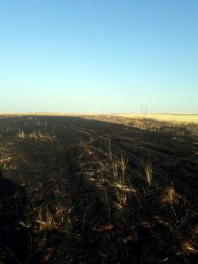 Güvercin elektrik teline takılınca 20 dönüm buğday tarlası kül oldu