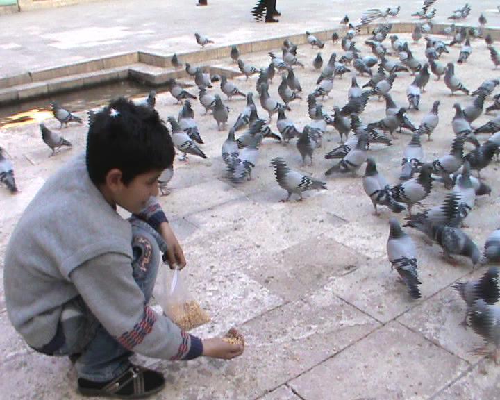 Küçük Mahmut Harçlıkları ile güvercin besliyor