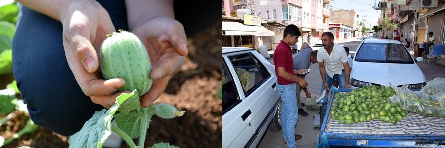 Şanlıurfa'da şelengo sezonu açıldı