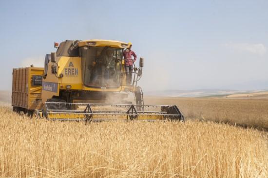 Bitlis'te buğday hasadı başladı