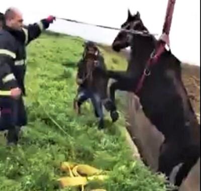 Şanlıurfa'da kanala düşen at kurtarıldı