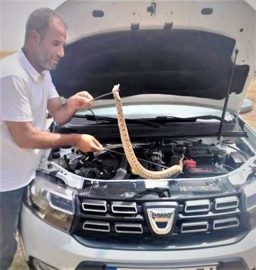 Otomobilin motoruna giren yılan güçlükle çıkartıldı