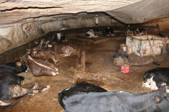 Mağarada besihane