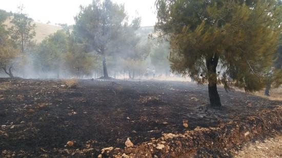 Atatürk Barajı ormanında korkutan yangın